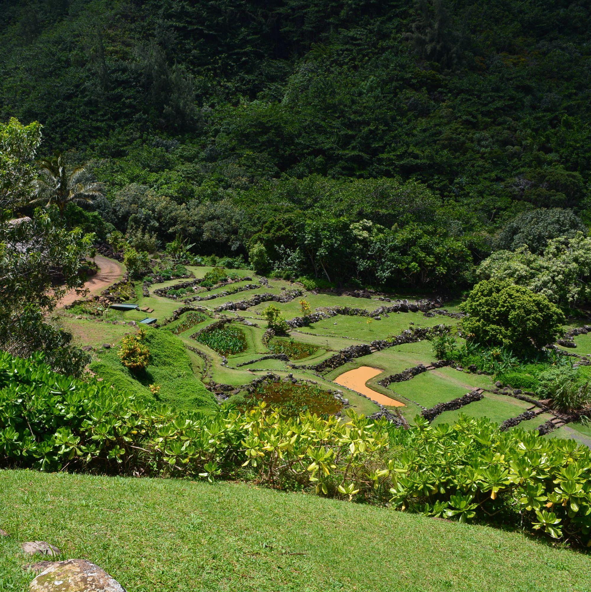 Limahuli Garden Preserve Retool